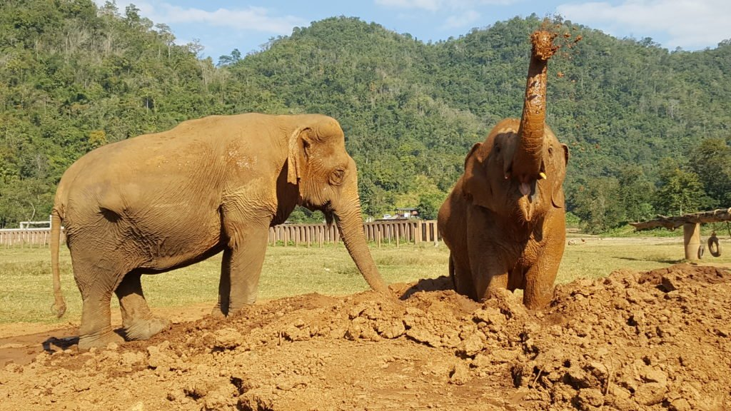 Elephant Nature Park | Chiang Mai Thailand | Southeast Asia Itinerary