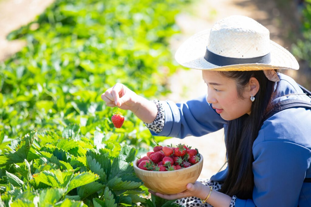 strawberry picking | How to Have a Stellar Summer Staycation