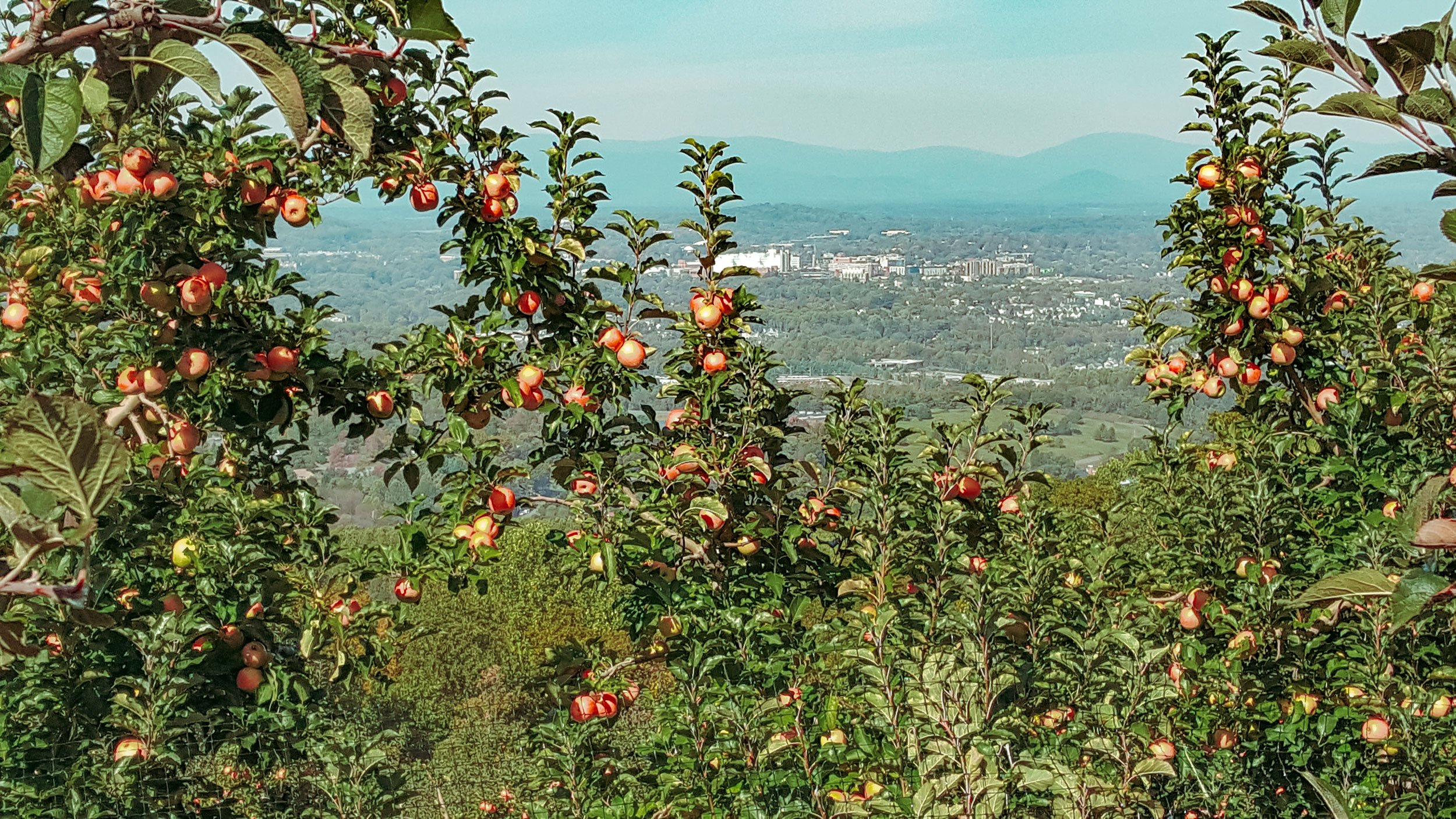 Carter Mountain Orchard | Free Things to Do in Charlottesville