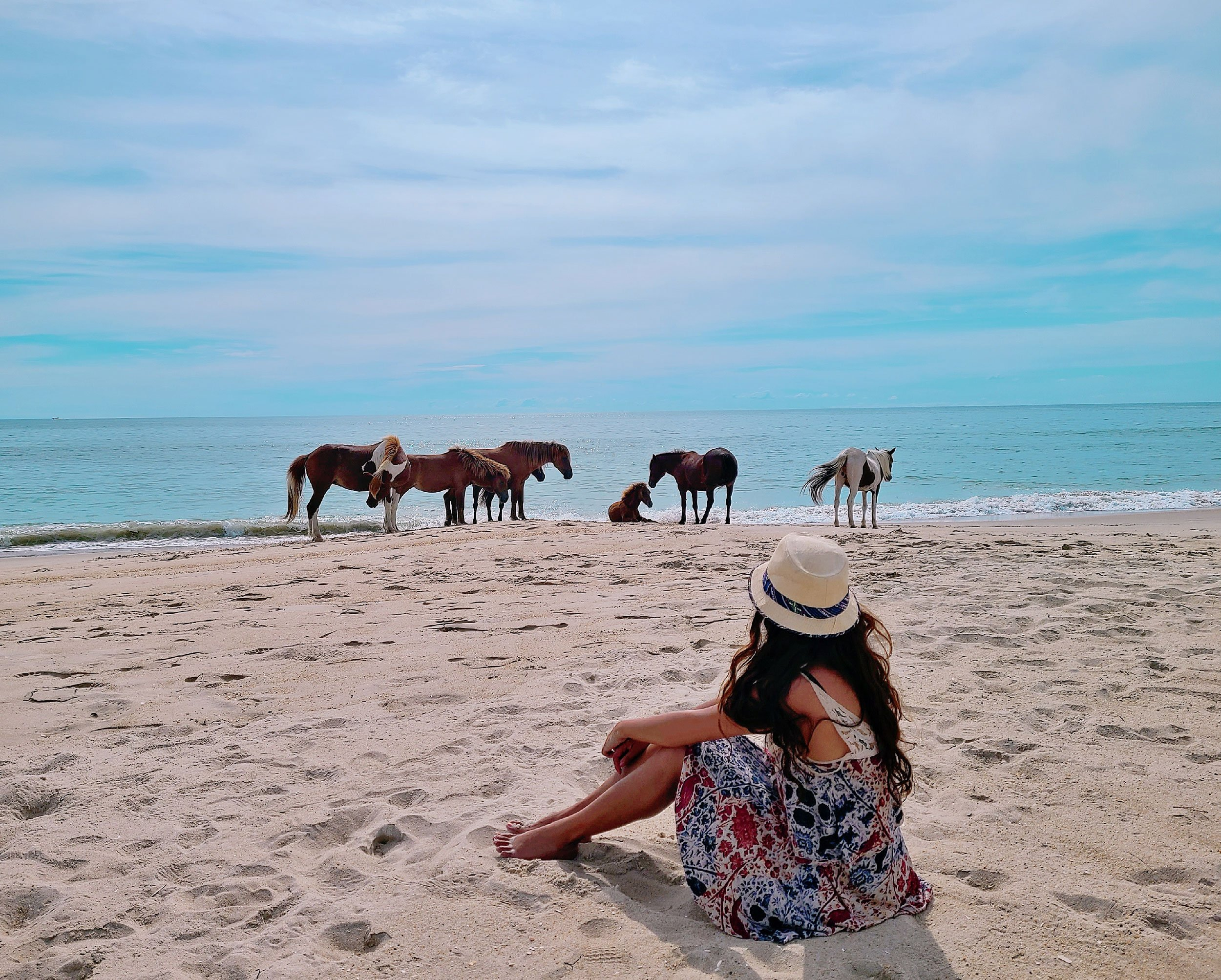 Wild ponies on Chincoteague Island Virginia | 2 Week Virginia Road Trip from Washington DC
